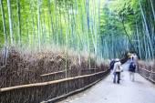 Kyoto, japan - grüner bambus-hain in arashiyama — Stockfoto