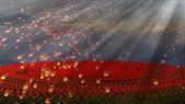 Flower field at sunset — Stock Photo