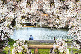 Beautiful sakura season, Japan — Stock Photo