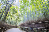 The Bamboo Grove in Arashiyama — Foto de Stock
