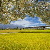 Landscape of paddy farm under blue sky in Hualien — Stock Photo
