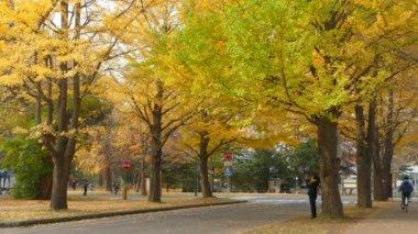 Hokkaido University na podzim — Stock video