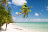 热带海滩和棕榈树 — 图库照片