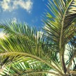 Palm tree over blue sky with white clouds — Stock Photo #53403733
