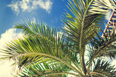 Palm tree over blue sky with white clouds — Foto de Stock