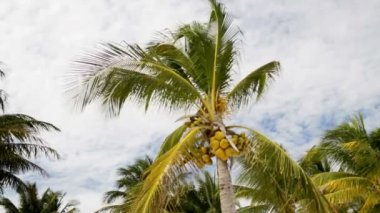Palm tree over blue sky with white clouds — Stockvideo