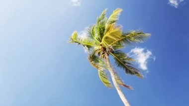 Palm tree over blue sky with white clouds — Stock Video