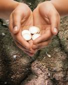 Female hands holding euro coins over ground — Stock Photo