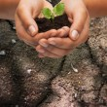 女人手保持土壤的植物 — 图库照片 #63973947