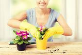 Housewife with flower in pot — Photo