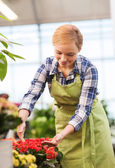 Happy woman taking care of flowers in greenhouse — ストック写真