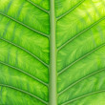 Green palm tree leaf — Stock Photo #69828843