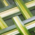 Green palm tree leaf grid texture — Stock Photo #69828863