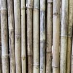 Bamboo cane wall texture — Stock Photo #69829125