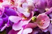 Lindas flores de orquídea — Fotografia Stock