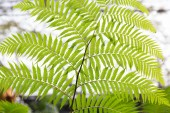Green fern frond — Stock Photo