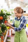 Happy woman touching mandarin tree in greenhouse — Stock Photo