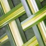 Green palm tree leaf grid texture — Stock Photo #70775827