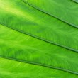 Green palm tree leaf — Stock Photo #71593793