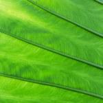Green palm tree leaf — Stock Photo #71593793