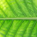 Green palm tree leaf — Stock Photo #71593811