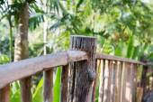 Wooden fence at tropical woods or park — Stock Photo