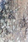 Tree trunk bark texture — Stock Photo