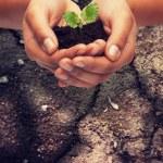 kobieta ręce trzymając roślin w glebie — Zdjęcie stockowe #75498349