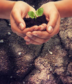 Woman hands holding plant in soil — Stockfoto