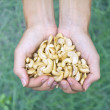 Cashew nuts — Stock Photo #56716003