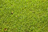 Grass texture — Stok fotoğraf