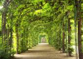 Beautiful tunnel made of trees — Stock fotografie
