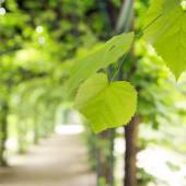 Green summer leaves in the green garden — Foto de Stock