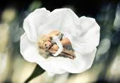 Alluring lady hiding herself into the flower — Stock Photo
