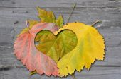 autumn leaves with heat — Stock Photo