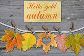 autumn leaves with clothes-peg — Stock Photo