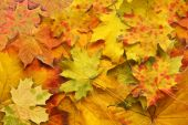 Red and yellow autumn sheet — Stock Photo