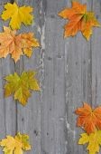 Autumn leaves  on wood background — Stock Photo