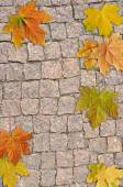 Background from  stone and leaf — Foto de Stock