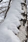 Icicles hung on dry wood — Stock Photo