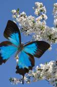 Blue butterfly on hand — Stock Photo