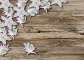 Flowers on old  boarderes — Stock Photo