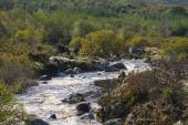 Wild river and forest, County Wicklow, Ireland — Stock Photo