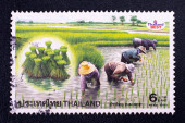 A stamp printed in Thailand shows Thai farmer transplant rice seedlings — Stock Photo