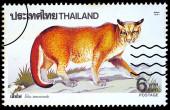 A stamp printed in Thailand shows image of Felis temmincki, circ — Stock Photo