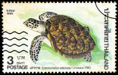 A stamp printed in Thailand shows image of Hawksbill sea turtle  — Foto de Stock
