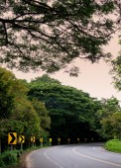 Road in forest, Thailand — Fotografia Stock