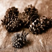Conifer cone — Stock Photo