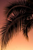 Coconut leaf silhouette with sunset sky background — Stock Photo