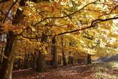Autumnal beech forest — Stock Photo